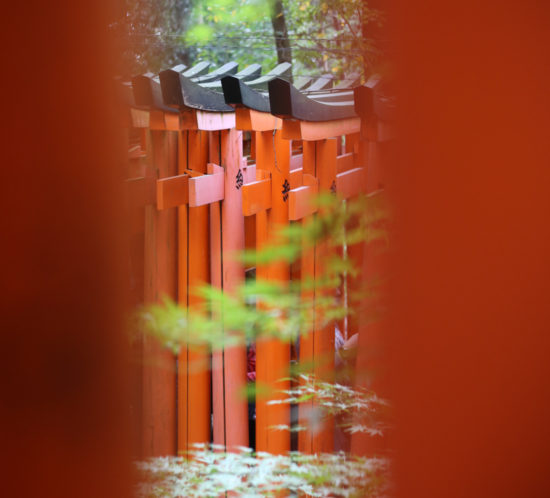 JoanneThies-Kyoto-1100pxwide-58